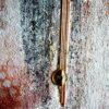 """Abstraktes Acryl Gemälde """"Loft Looks Like 493"""" Unikat (240)"""